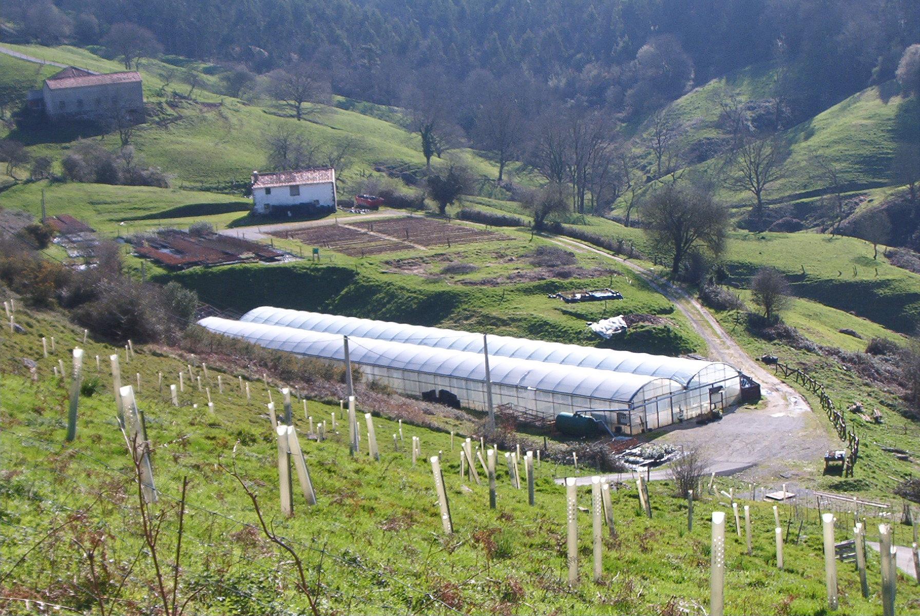 Vivero forestal el pendo cantabria producci n de planta for Viveros en asturias
