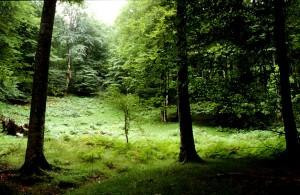 bosque-miera