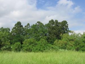 bosque-ribera-ria- Fundación Naturaleza y Hombre Anillo Verde  FNYH