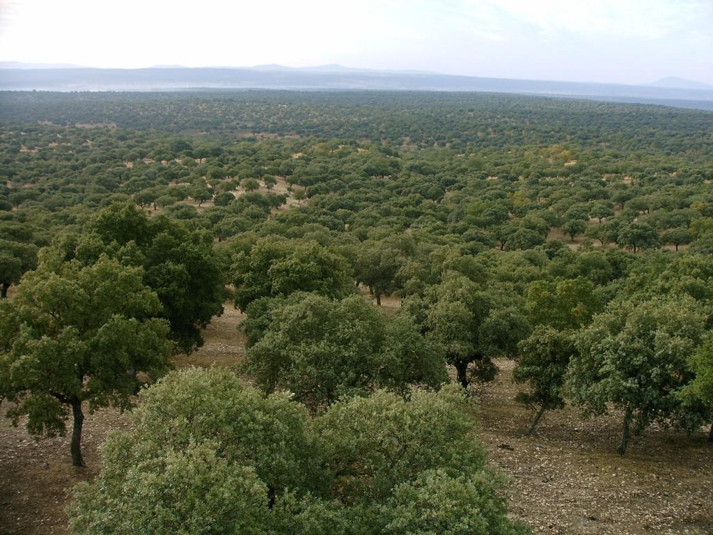 Dehesas en Salamanca Fundación Naturaleza y Hombre