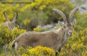 Fundación Naturaleza y Hombre Oeste Ibérico4