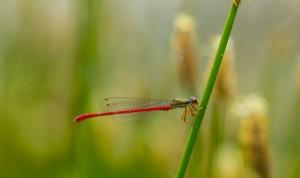 fundación naturaleza y hombre FNYH Entomología fotos Insectos