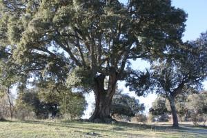 Pinar de Puebla y CArboneras (38)
