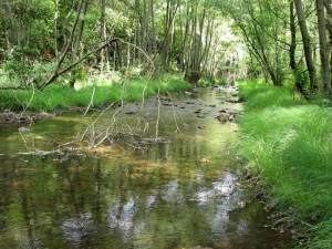 serra-da-malcata en Reserva Campanarios Oeste Iberíco Fundación Naturaleza y Hombre FNyH