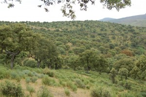 sierra-de-gata en Reserva Campanarios Oeste Iberíco Fundación Naturaleza y Hombre FNyH