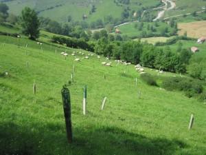 finca-de-fnyh-con-plantacion-forestal-y-gestion-silvopastoral