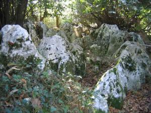 la-roca-caliza-aporta-el-habitat-mas-adecuado-para-las-encinas