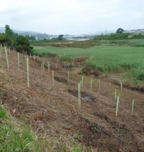 plantacion-con-especies-autoctonas-realizada-en-la-cabecera-de-la-ria