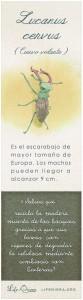 04 A Lucanus cervus