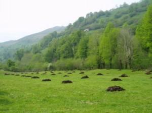 Abono natural de finca pasiega en el Valle del Miera