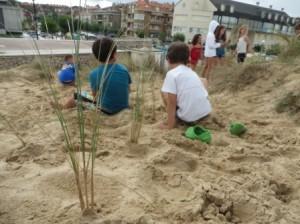 El barrón (Ammophyla arenaria) retiene la arena y ayuda a fijar las dunas