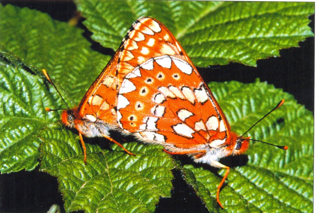 6.Euphydrias