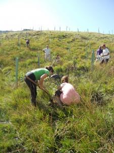 Voluntariado en Bernallán. 006