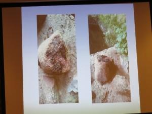 Imágenes de excremento de nutria en una roca