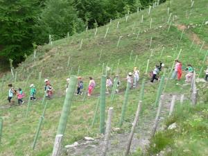 Voluntarios visitan los trabajos de reforestación