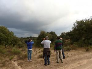 Observando la fauna de Campanarios de Azaba.