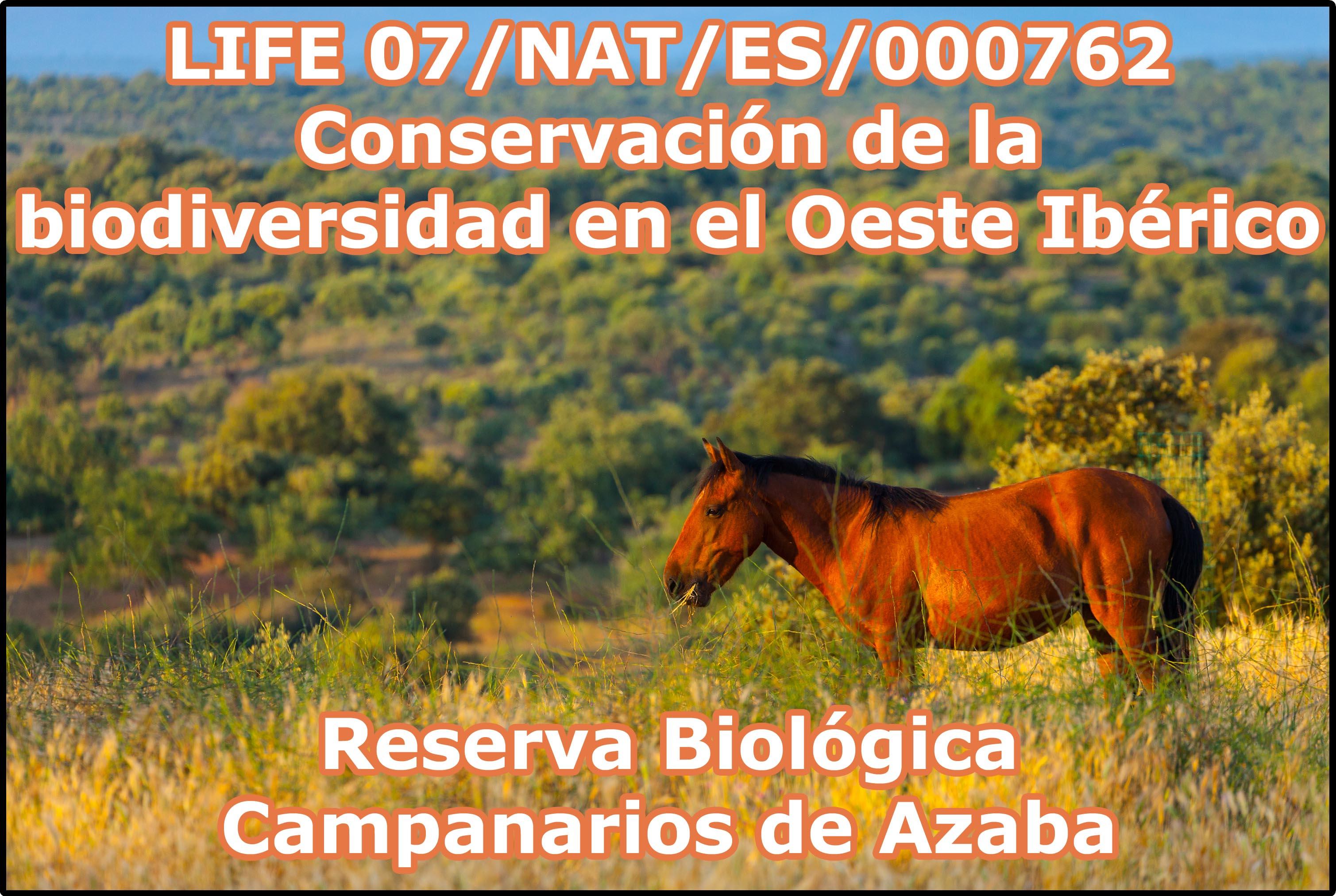 LIFE_Campanarios2