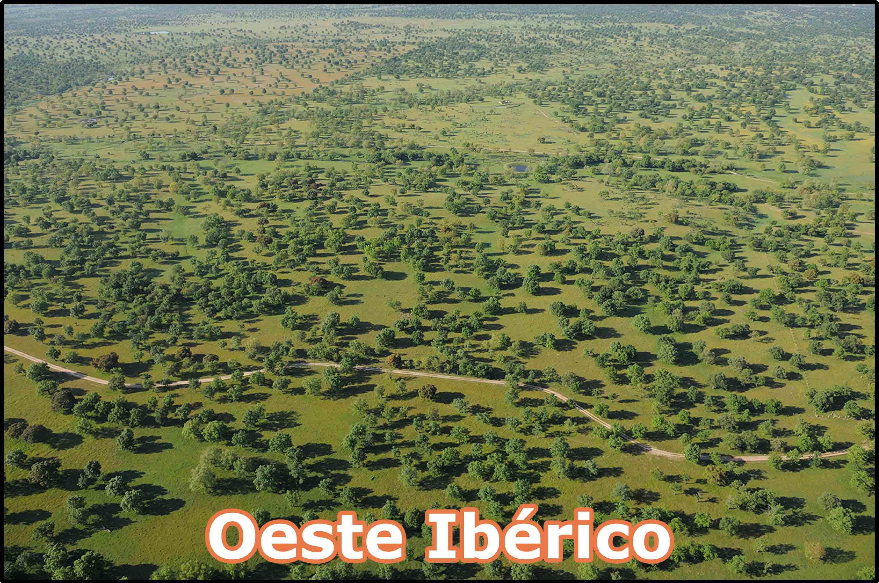 OesteIberico2