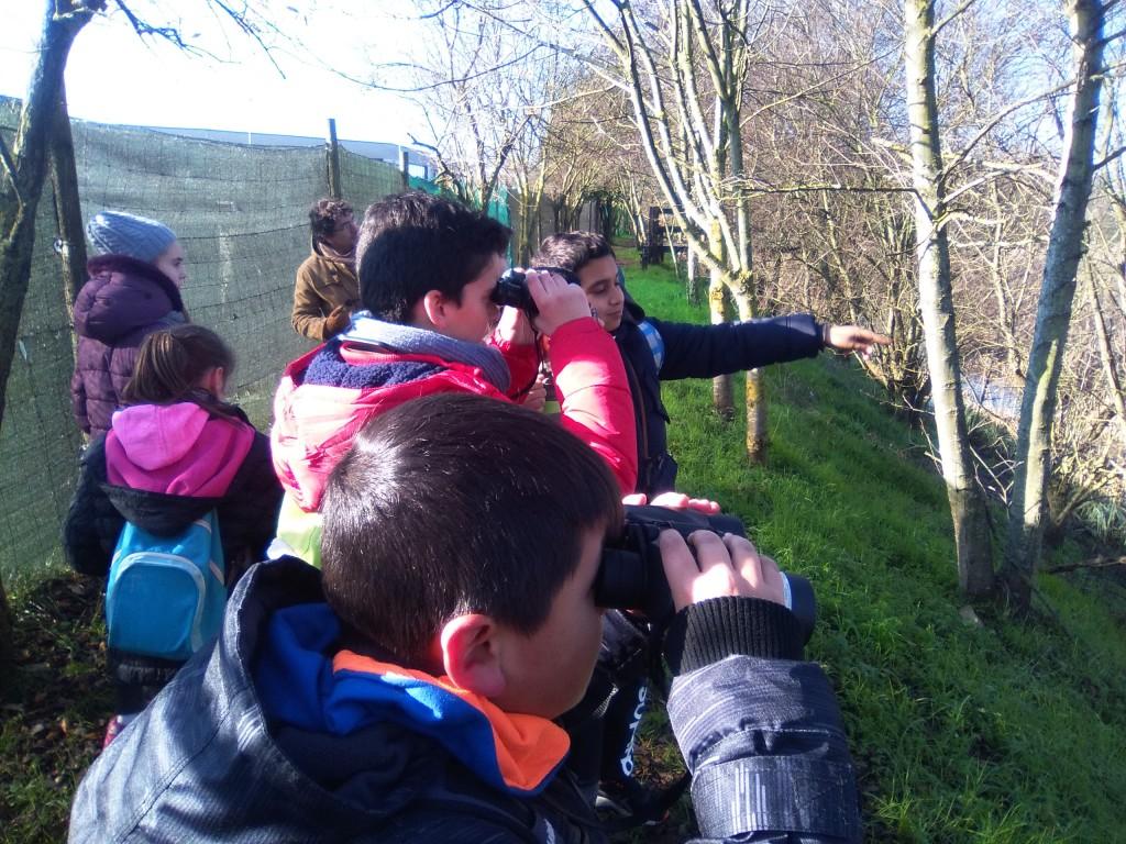 Colegio Fuentes de la salud observando aves