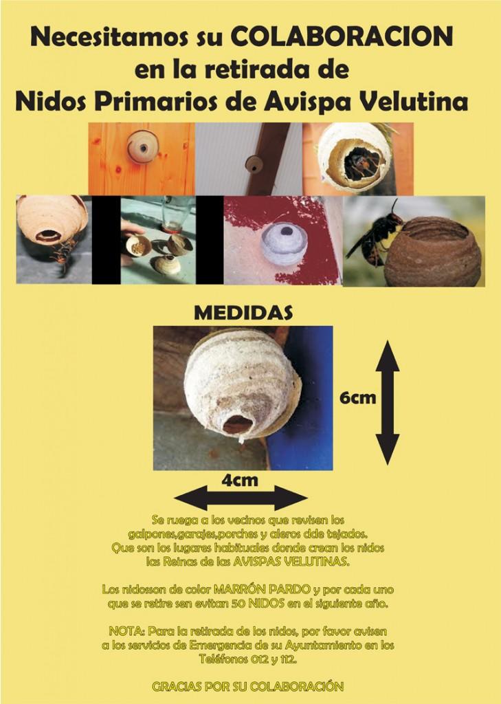 Cómo reconocer los nidos primarios de la avispa asiática.