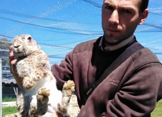 Trabajador de FNYH soltando un conejo.
