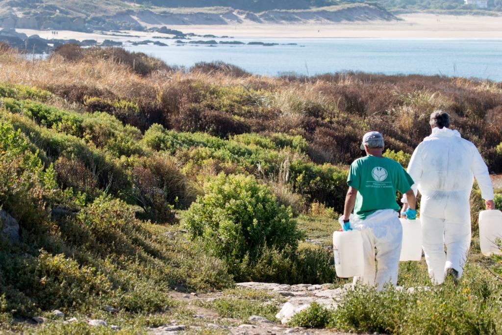 Labores de eliminación de invasoras en la Isla de Santa Marina