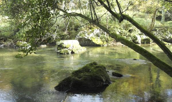 Bosque de galería en el río Miera en la ruta al Pozo Negro
