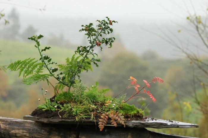 Centro de Navidad con plantas autóctonas
