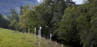 Jóvenes arboles plantados en Cornueva, Rubalcaba