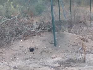 Majano o refugio de conejos.