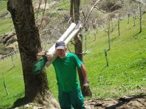 Trabajos de reforestación en la Montaña Cantábrico - Burgalesa