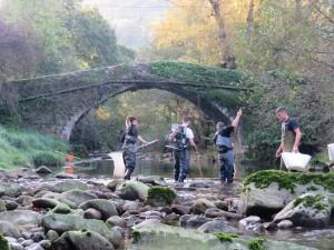 Rescate de peces bajo uno de los puentes de Liérganes.