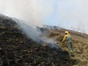 Un guarda de Fundación Naturaleza y Hombre se afana en el extinción de un fuego en Portillo Ocijo. Foto de Luis Cobo Higuera (FNYH).