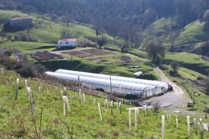 Plantaciones y viveros Cantabria Fundación Naturaleza y Hombre FNYH