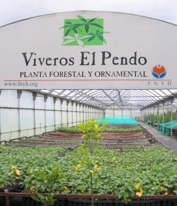 Plantaciones en  Cantabria Fundación Naturaleza y Hombre FNYH PENDO