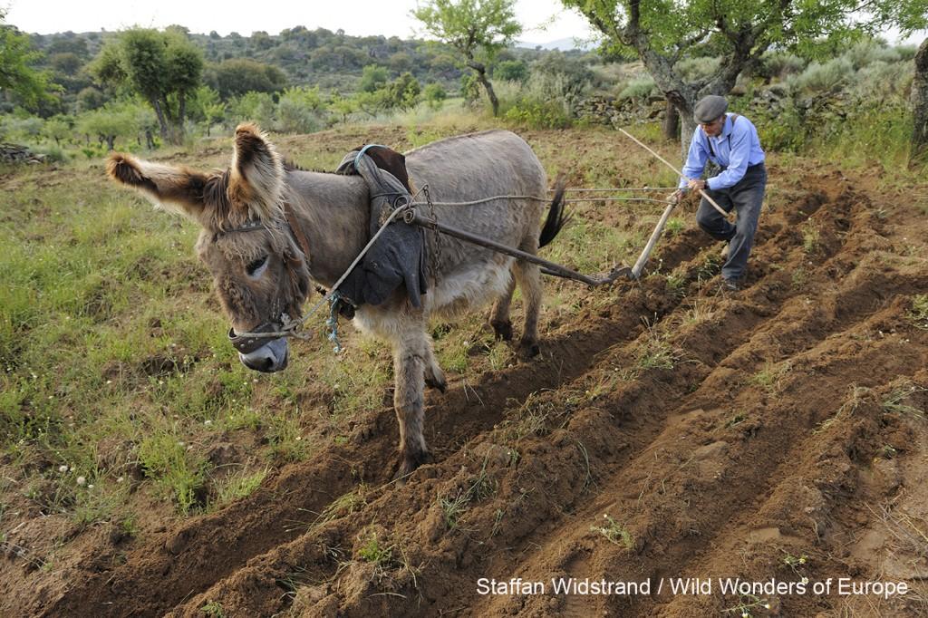 Fundación Naturaleza y Hombre Oeste Ibérico 2