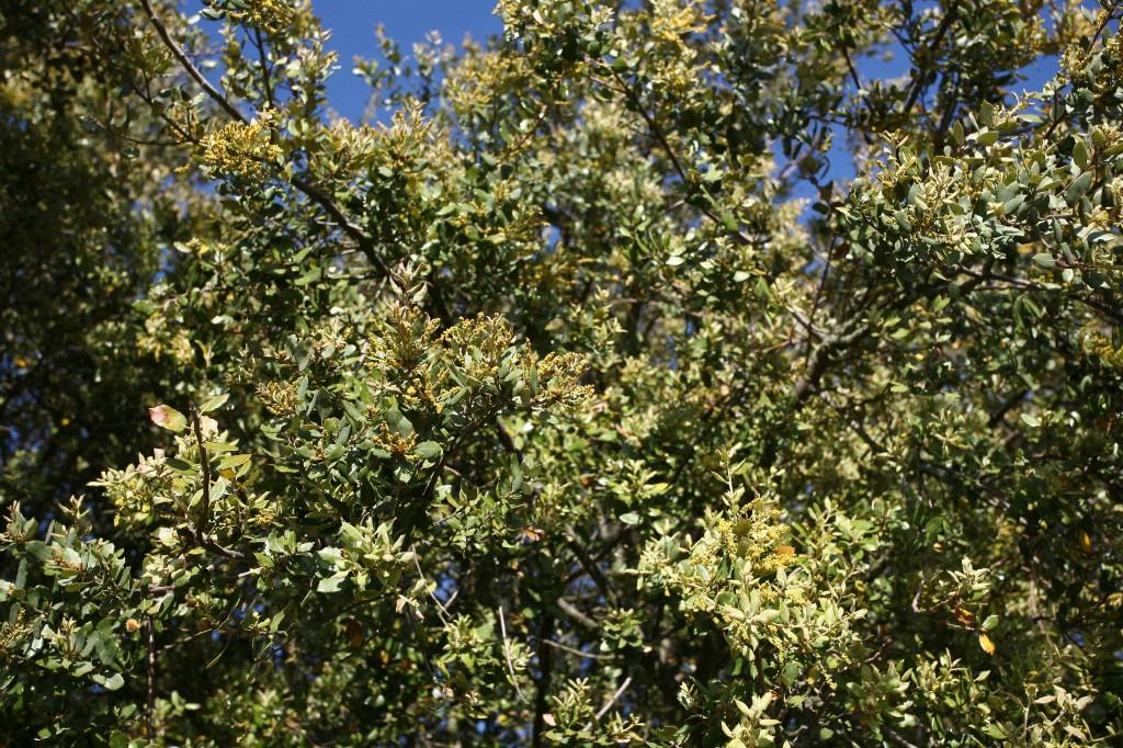 Flora en el Oeste Ibérico Fundación Naturaleza y Hombre