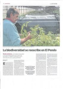 Producción de Woodwardia radicans en el vivero El Pendo (Parte 2)