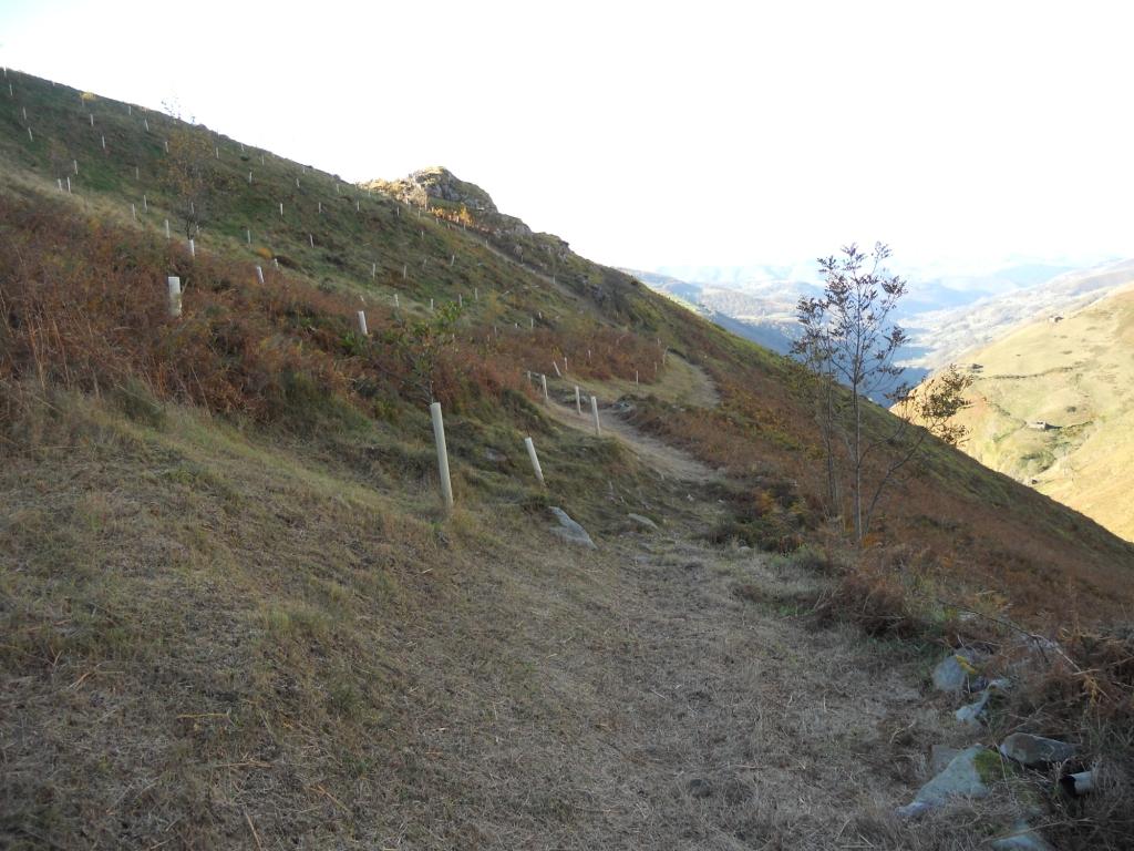 cortafuegos en la Montaña Pasiega
