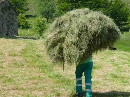 Velorta de hierba en la Montaña Pasiega