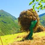 Recogiendo la hierba para el invierno