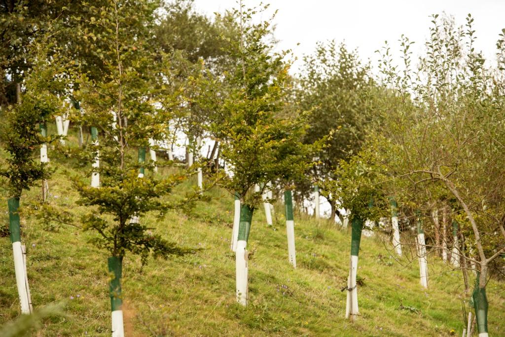 Reforestación una década después