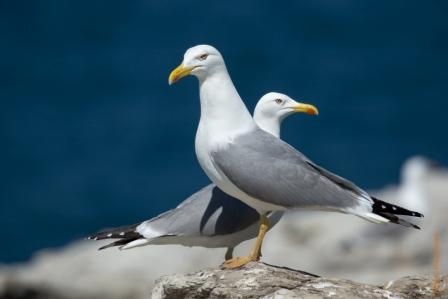 Las aves marinas se refugian en Santa Marina