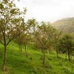 Reforestación con castaños en el LIC Montaña Oriental