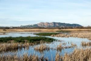 Humedales litorales: las marismas de Alday