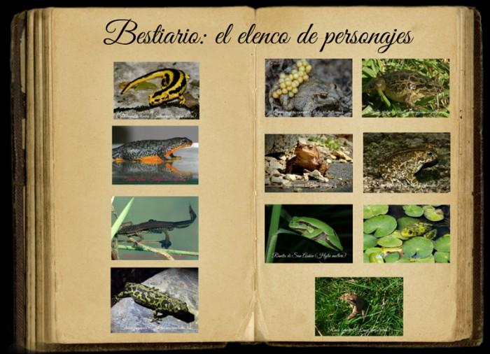 los anfibios del río Miera