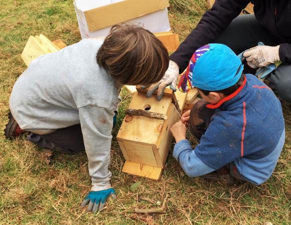 Dos niños entretenidos construyendo cajas nido