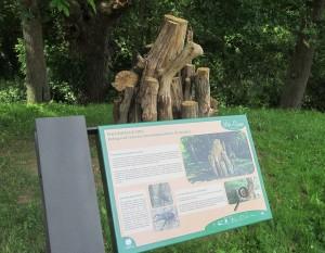 Las pirámides de madera muerta sirven de refugio a larvas.