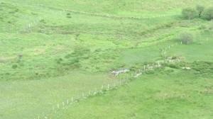Cierre perimetral de protección del tremedal de Bernallán