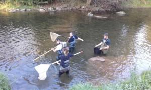 El rescate de peces se hace mediante pesca eléctrica